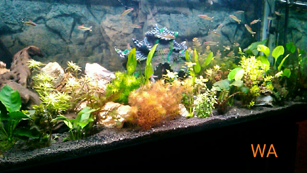 Aquarium maintenance how to clean a fish tank by autos post for How to clean a fish tank